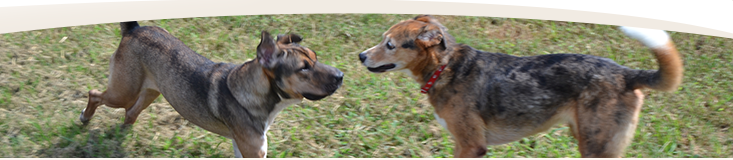 Website banner - dogs