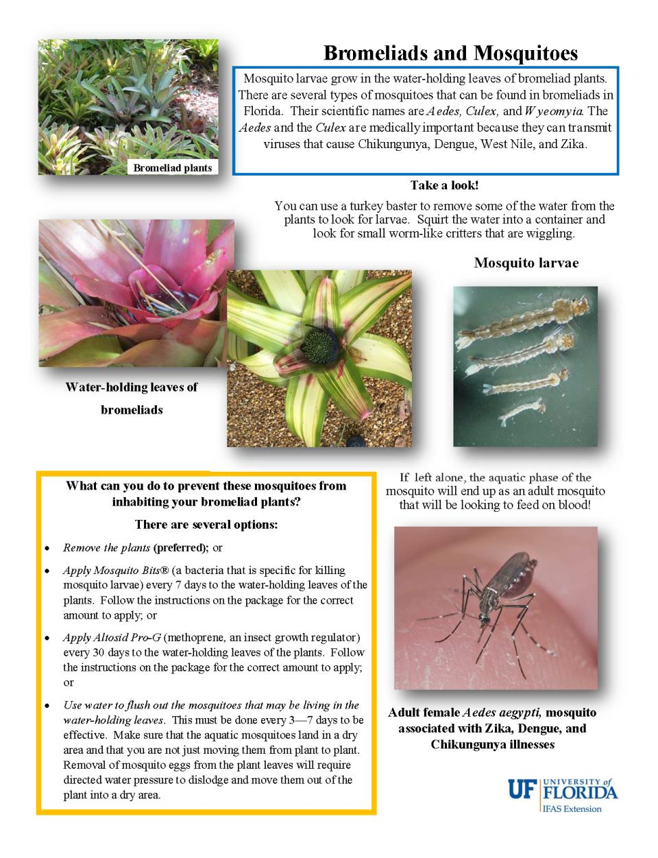 Bromeliads and Mosquitoes_1 page flyer_plain