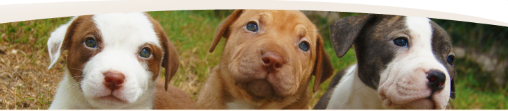 Animal foster website banner