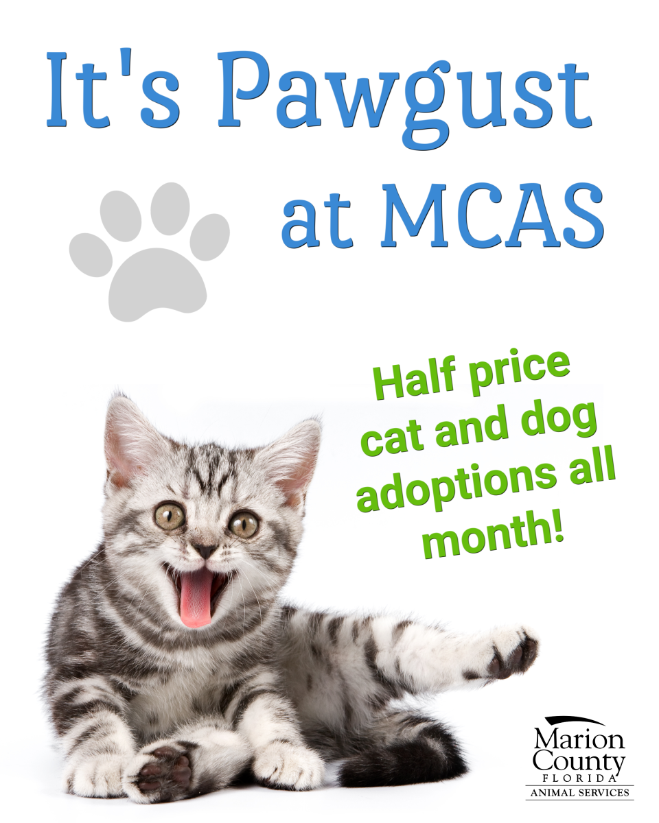 Half price adoptions in August