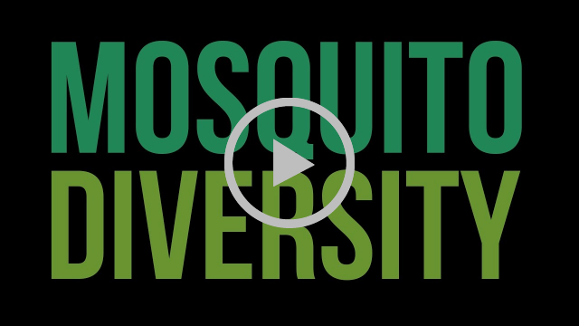 Mosquito diversity Video still frame