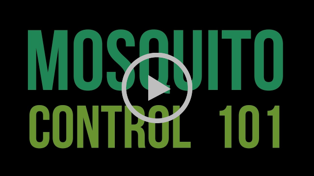 Mosquito 101 Video still frame
