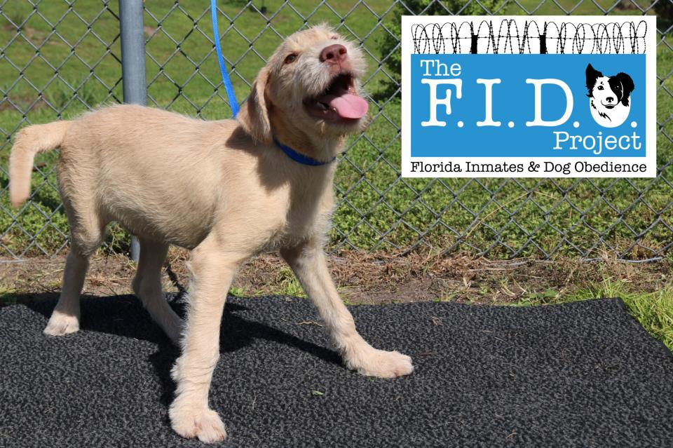 The FIDO Project (Florida Inmates and Dog Obedience