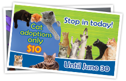 Animal Services Adopt a Cat Month June