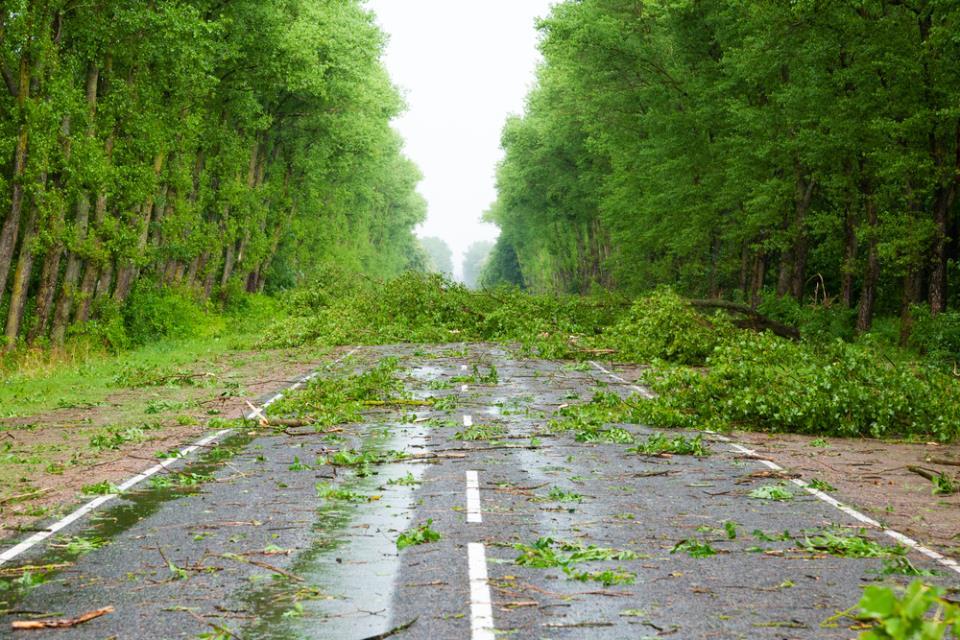 Road debris after storm