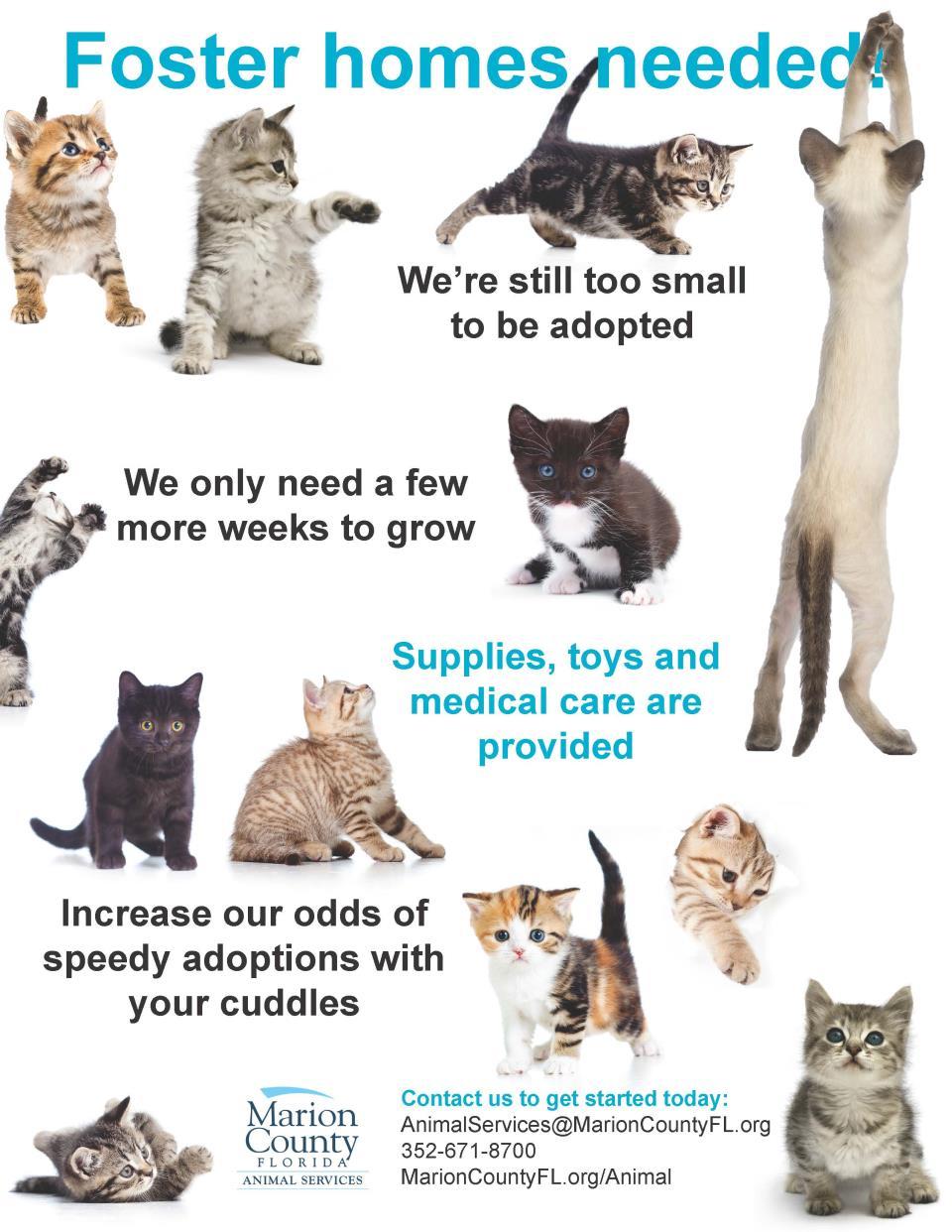 Kitten season fosters needed young