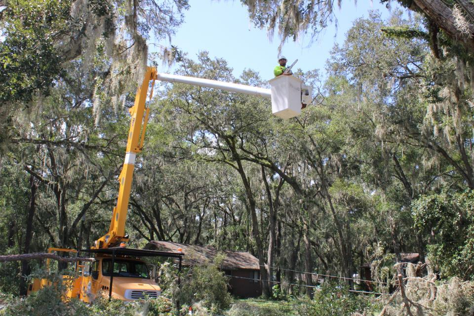 Irma clearing limbs
